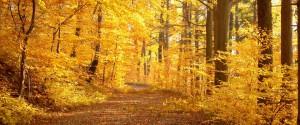 Cure d'automne